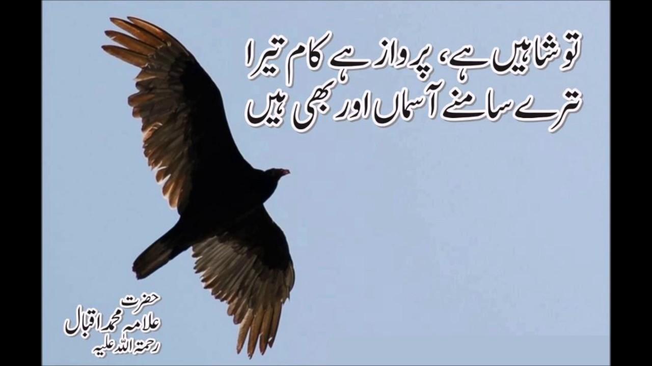 Urdu Shayari Allama Iqbal - download.cnet.com