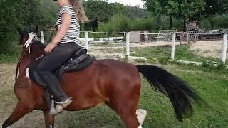 Evitar cavalos para charley exercícios