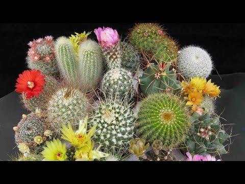 Singularidades Del Cactus Y Las Suculentas, Una Tendencia Natural - TvAgro por Juan Gonzalo Angel
