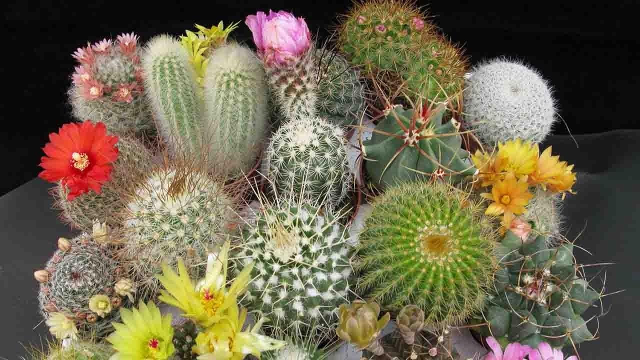 Singularidades del cactus y las suculentas una tendencia for Cactaceas y suculentas