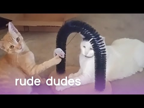 Rude Dudes: Pushy Pups, Clingy Cats & Farting Dogs  | The Pet Collective
