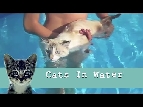'Cats in Water' : Funny Cat Video