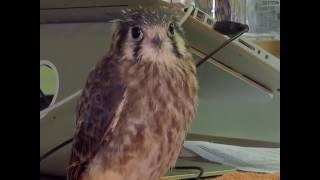 NO COMMENT  Նյու Յորքի շահույթ չհետապնդող ընկերությունը օգնում է վիրավոր թռչուններին