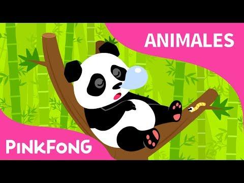 Ni Hao Panda | Panda | Animales | PINKFONG Canciones Infantiles
