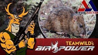 Air Gun Pest Control - Rat Shooting