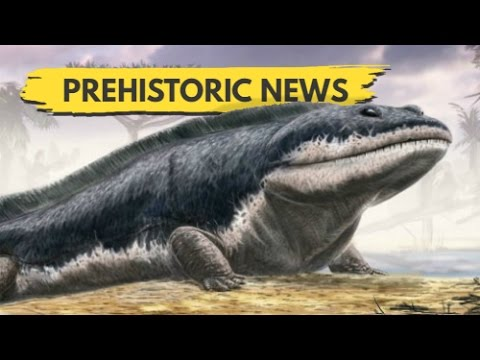New Discovery May Rewrite The Move From Water To Land | Prehistoric News