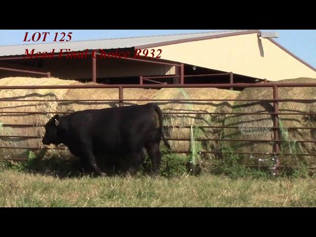Mead Angus Lot 125