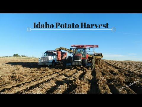 Idaho Potato Harvest 2016