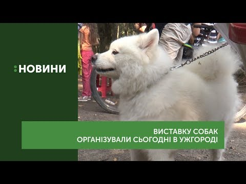 Понад 100 собак взяли участь у виставці-конкурсі «Зірка Закарпаття»