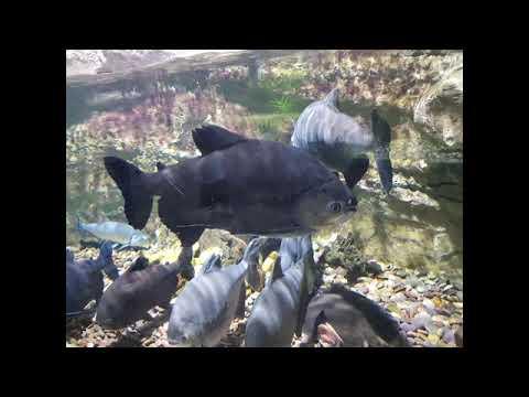 Dubai Mall Aquarium and underwater Zoo || Dubai Aquarium 2021.