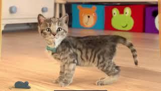 Fun Cute Kitten Game Play Fun Pet Care Kids Game  Little Kitten My Favorite Cat #340