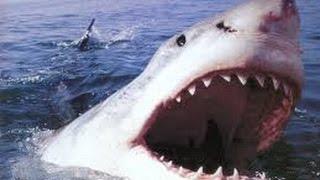 Дикая природа.  Охота на охотника.  Акула.  Документальный фильм National Geographic