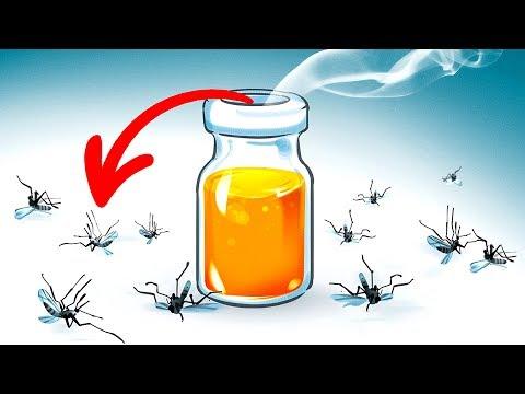 15-cara-alami-mengusir-nyamuk-di-taman