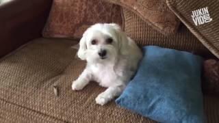 Пакости домашних животных / funny animals
