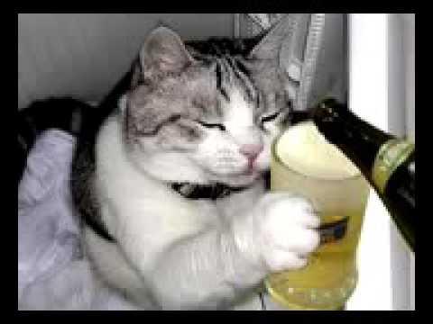 Oracion de la cerveza