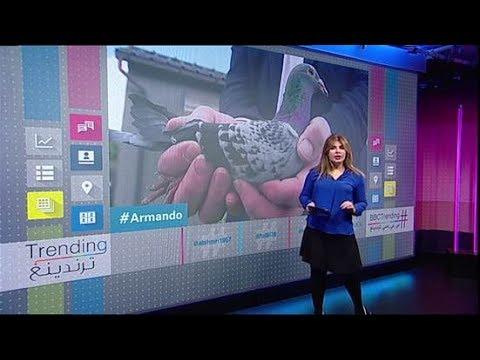 أرماندو يصبح أغلى طائر حمام في العالم  - نشر قبل 3 ساعة