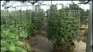 New York state allowing hemp growth