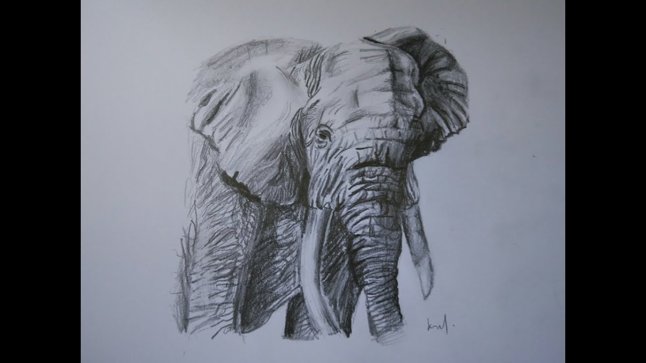 How to draw an elephant with pencil hb8b