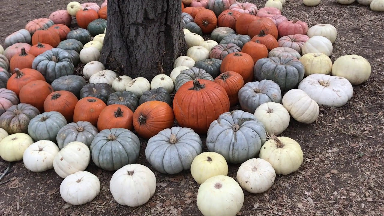A Halloween Tour at Descanso Gardens!