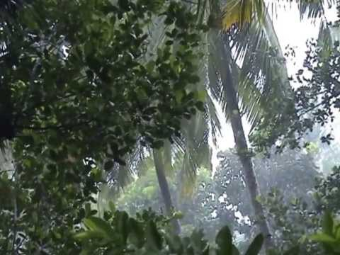 Amazing moments of Kerala rain, a real nostalgic feast! മഴക്കാലം !!