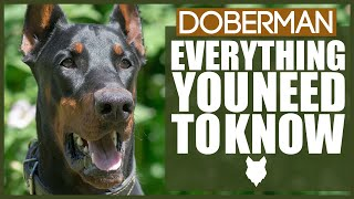 DOBERMAN! Everything You Need To Know! DOG BREED BREAKDOWN