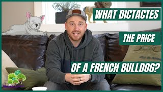 What Dictates the Price of a French Bulldog?