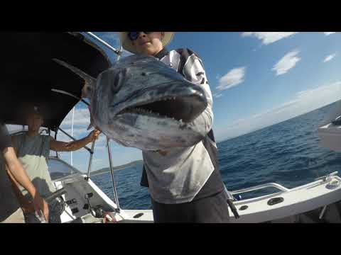 Mackerel Fishing - Mid North Coast NSW