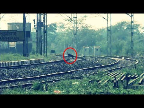 Indian Railways..Lil Doggy poses before blasting BRC WAP-4E with 12905 PBR OKHA-HWH SF Exp!!