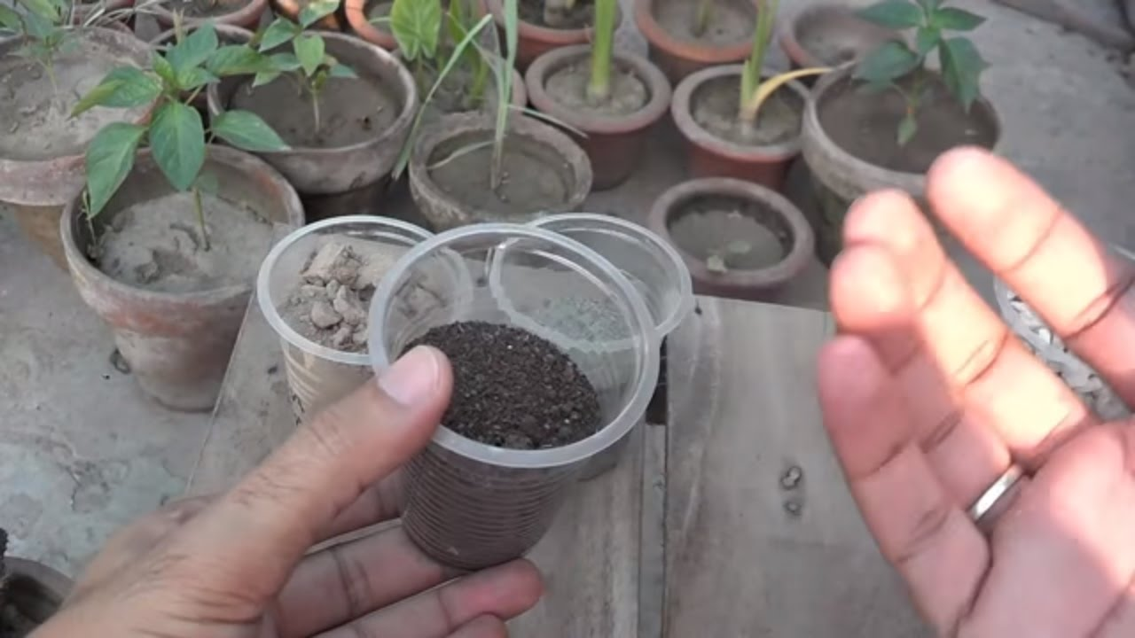 Potting soil information well drained soil potting mix for What is soil made out of