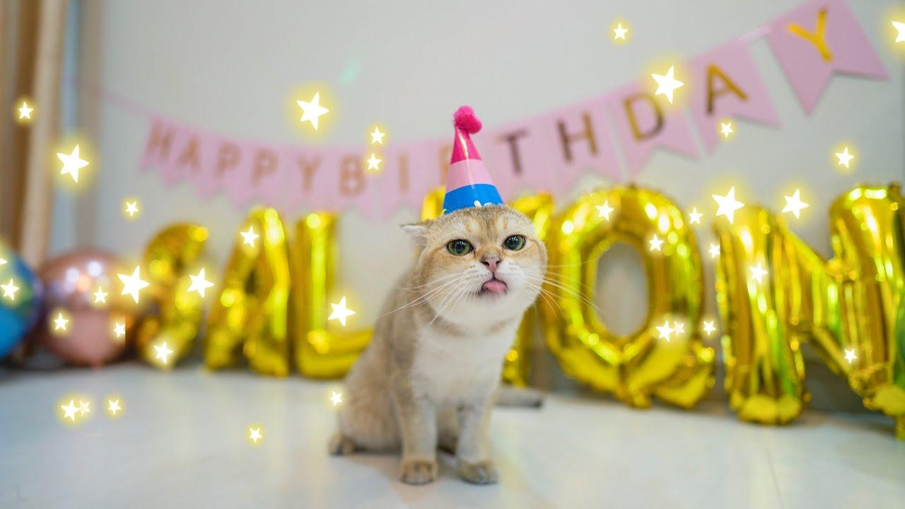 LẦN ĐẦU TỔ CHỨC TIỆC SINH NHẬT CHO SALMON TRÒN 1 TUỔI   The Happy Pets #79
