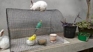 Baby bunnies and birds playing ❤