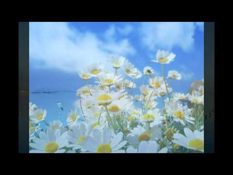 The Elegance of Pachelbel - Serenade