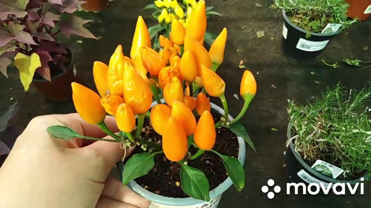"""Садовый центр """"Планета Лета"""".Красивые растения!!"""