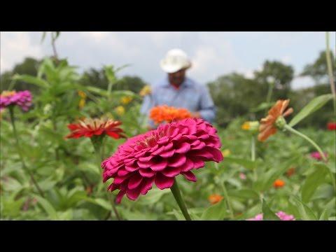 Texas Blooms | Arnosky Family Farms