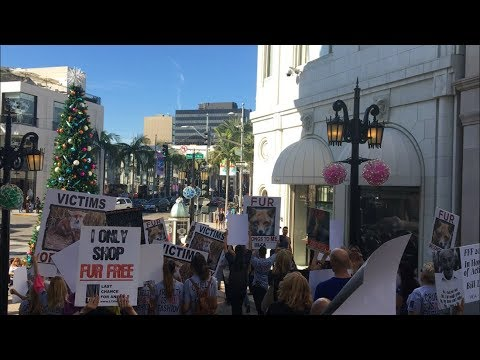 """Fur Free Friday"" in Beverly Hills"