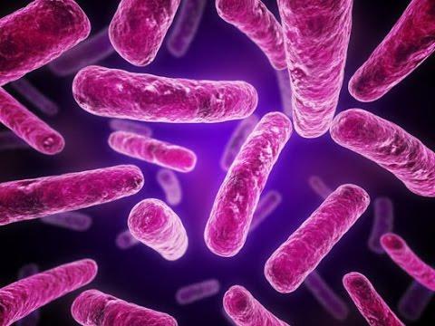 Bacilos Bacterias