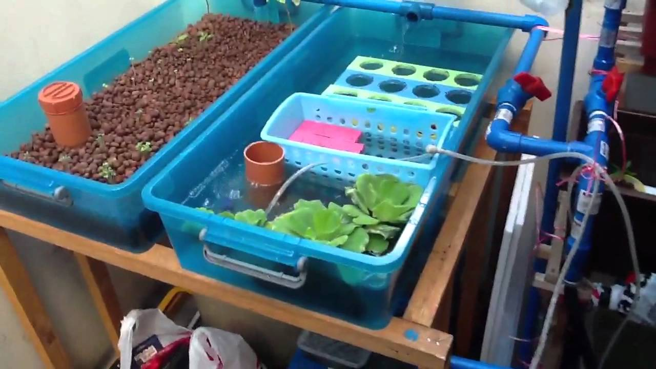 My Backyard Aquaponics System Philippines Youtube