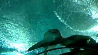 Größtes Aquarium der Welt: 83 Meter Tunnel mit Fischen im SEA Aquarium Singapur