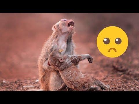İnsanlar Gibi Ağlayarak Yürek Burkan Hayvanlar