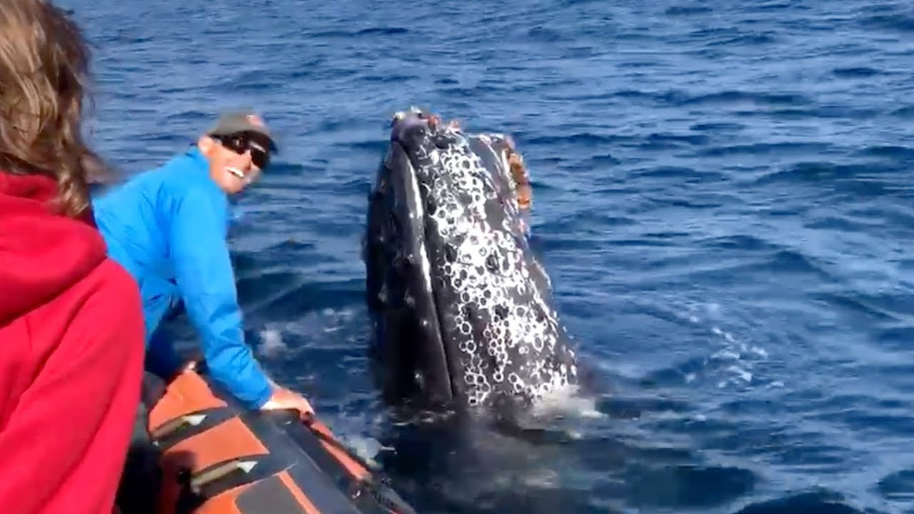 mr rogers the friendly whale visits boat three times before being