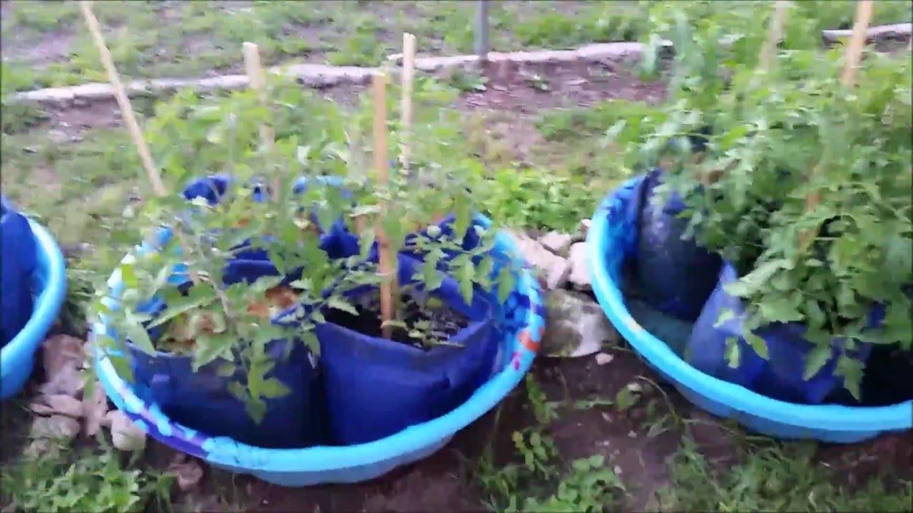 Kiddie Pool Grow Bag System 5 3 2016