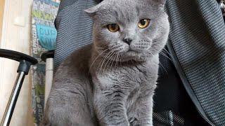 ВЛОГ про кота и процесс вязания жакета. Берем пример с Буся - сидим дома!