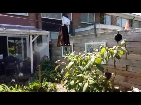buur katten uit je tuin houden doe je zo youtube
