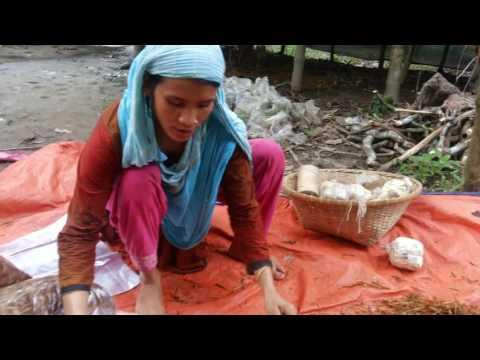 Mushroom  Cultivation in Bangladesh -01970220055