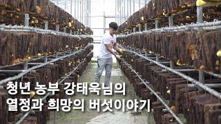 [경남 산청] 유기농 상황버섯 자연산 참나무 지리산 상…