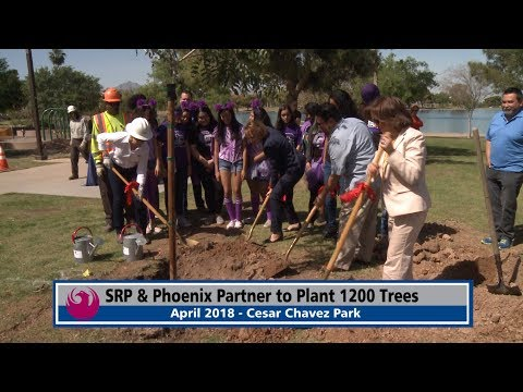 SRP and Phoenix Partner to Plant 1,200 Trees
