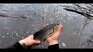 Рыбалка на донку ранней весной