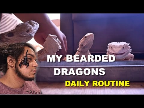 My Bearded Dragons Daily Routine 2019 🦎🦎🦎   Part 1