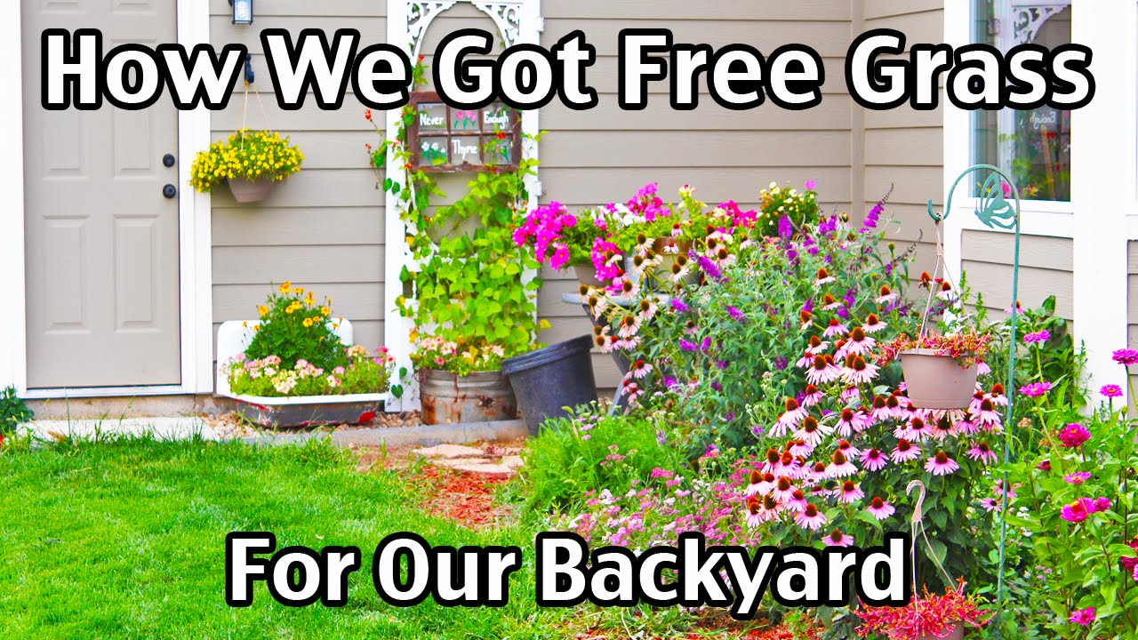 how we got free grass sod for our backyard youtube