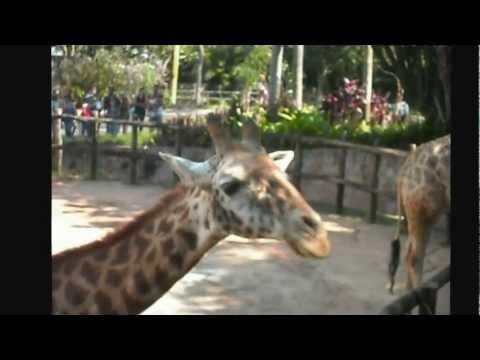 Zoo de São Paulo - Brasil - Brazil